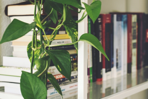 books and plant on a shelf