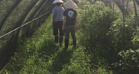 VEGGI's community farm